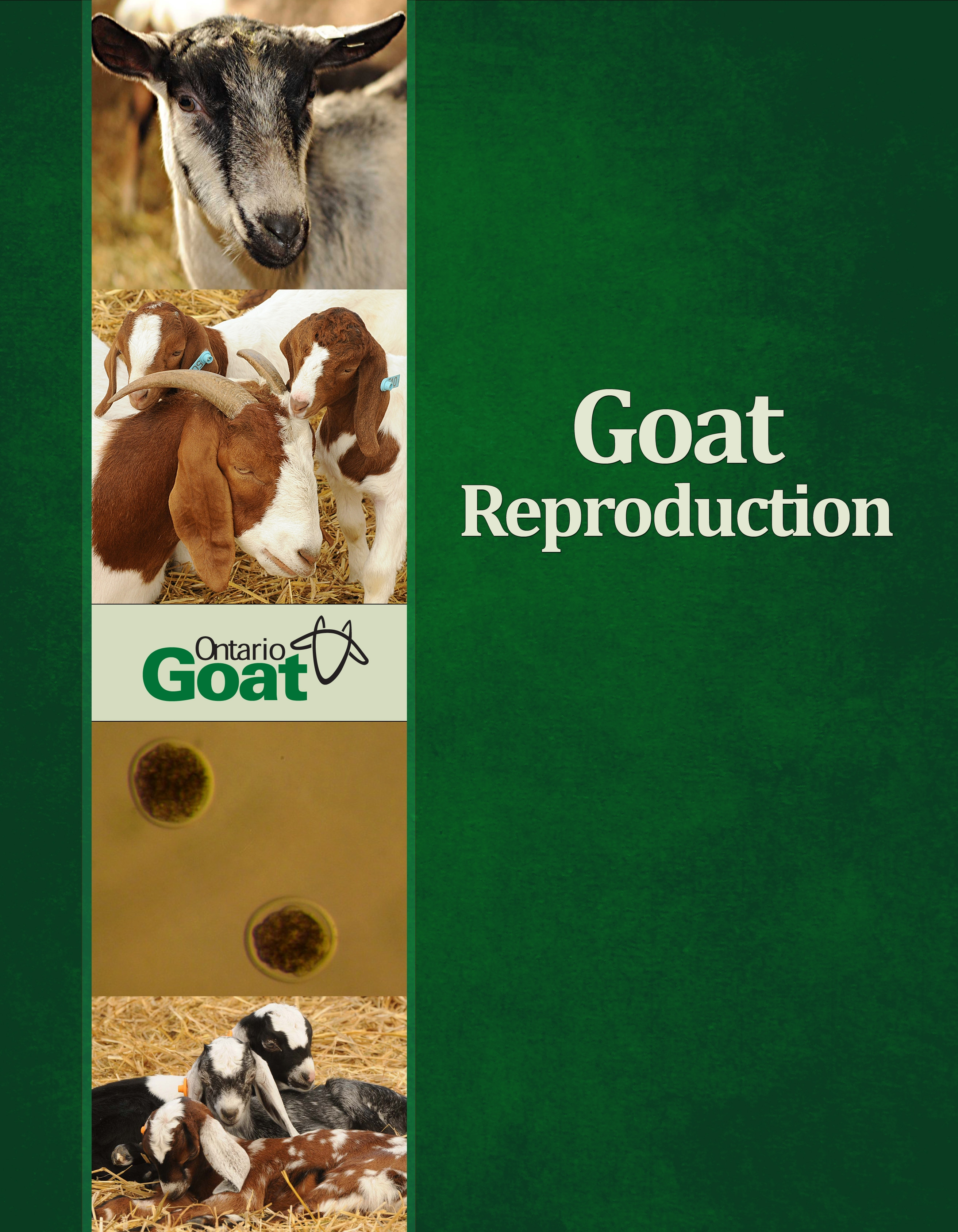 Goat reproduction cover