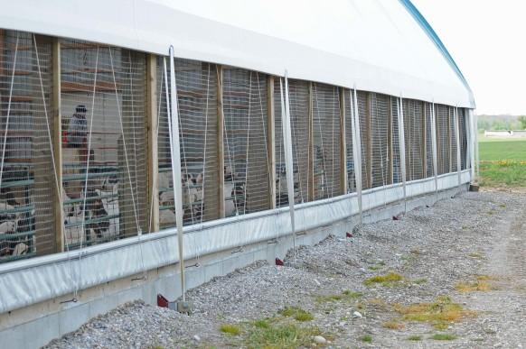 goat facility photo