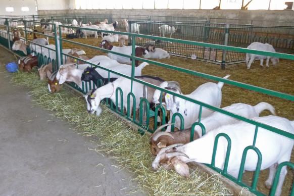 Vingerhoeds farm